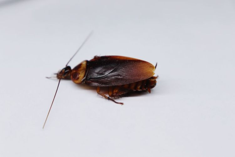 Crockroach Crockroach Dead Insect Full Length Red Animal Themes Close-up Animal Antenna Slug Mollusk Animal Shell Pest Grasshopper Animal Eye Slow Arthropod Mosquito Seashell Hermit Crab Beetle Butterfly - Insect Snail Invertebrate Bug Tortoise Shell Fly Praying Mantis