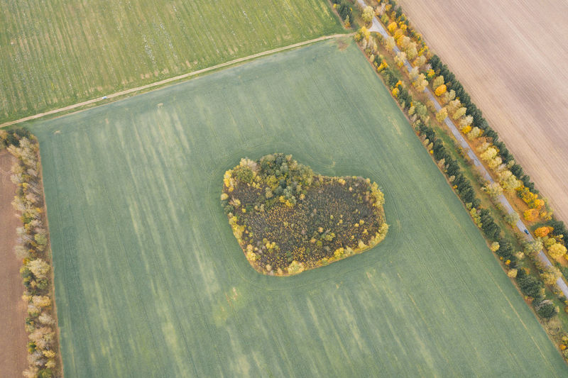 Beautiful field with a forest in the shape of a heart.