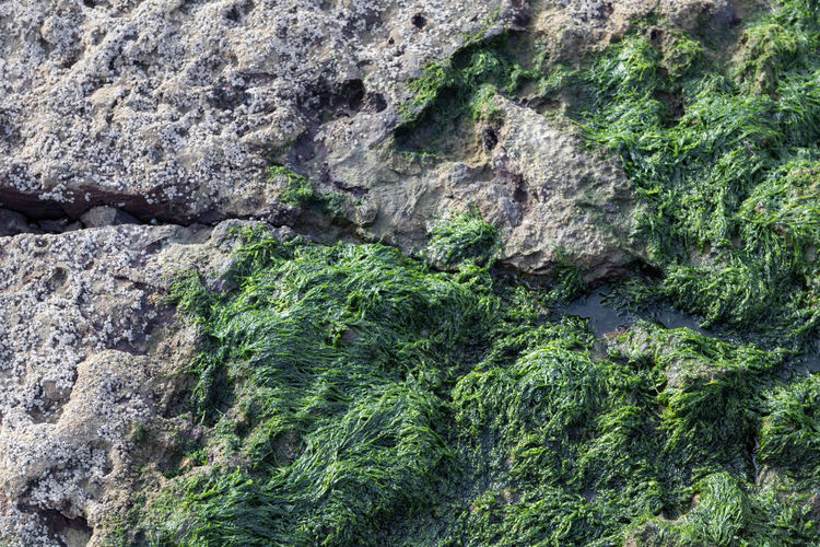 EyeEm Best Shots EyeEm Eye4photography  EyeEm Best Pics Backgrounds Abstract Full Frame Textured  Nature Solid Close-up Rock Rough Outdoors Rock - Object Geology Beauty In Nature Green Color Growth Rock Formation Sea Weed  Minimalism Minimalobsession Minimalist