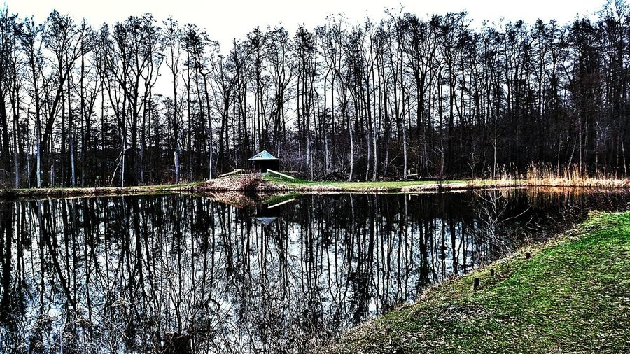Reflections In The Water Bare Trees Silhouettes Forest Lake Reflections Reflected In The Glassy Stillness Of The Water Peaceful Place Quiet Moments No People , WINTER Beauty In Nature Showcase March Last Days Of Winter?