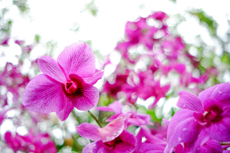 Orchid 🌺