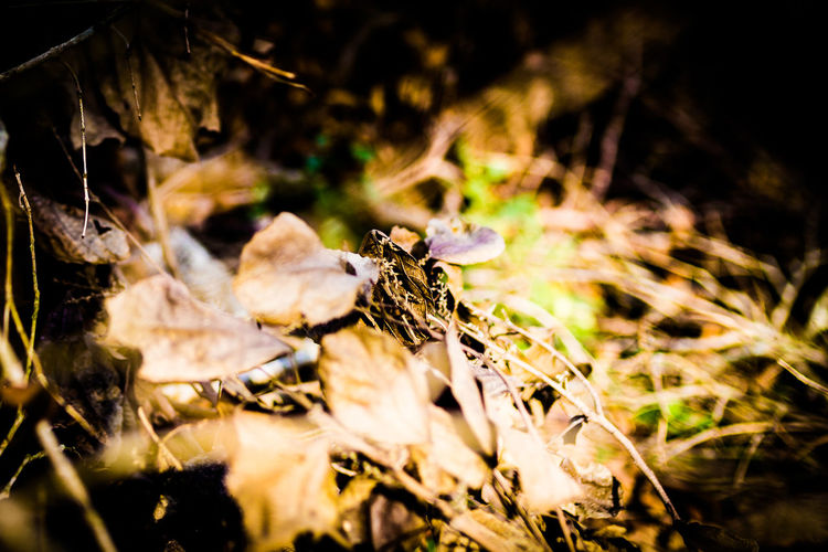 Parado na sacada do meu escritório, enquanto fumava um cigarro, notei os raios de Sol que iluminavam a paisagem devastada no terreno vizinho ao meu. As folhas das árvores recém derrubadas , assumiam cores pouco comuns em nossa região nesta época do ano. Então não tive escolha, peguei a camera comeceia registrar. Eis o resultado. Close-up Colour Of Life Cores Da Mor Cores Da Vida Cores De Outono Day Dourados Fall Ollors Folhas Secas  Nature No People Textures And Surfaces Tronco Cortad árvore Morta