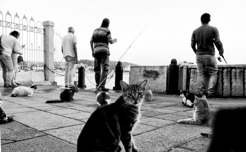 Rear view of people with cat against sky