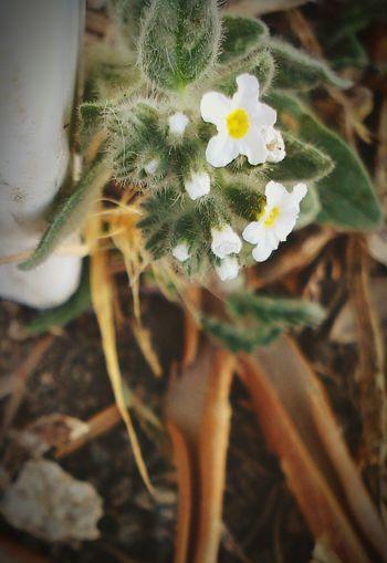 çiçek çiçeklerböcekler