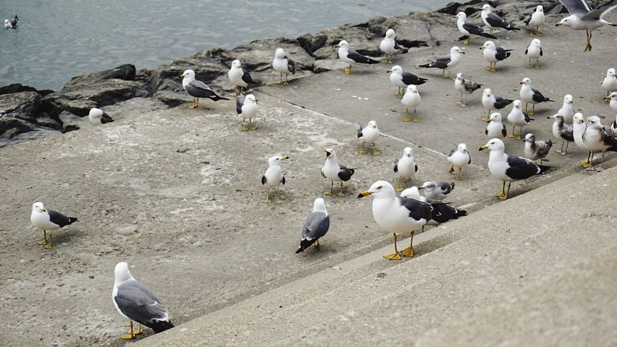 High angle view of seagulls on shore