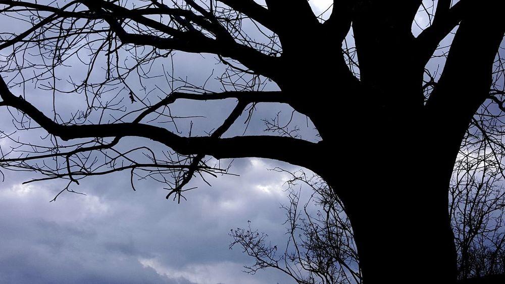 Tree Silhouette Sky_collection 💜☁💙☁💚☁💛☁ ❤❤❤❤❤❤ Sky, Sky Porn, Clouds And Sky, Clouds Cloud_collection  Cloud Love Skyporn TreePorn Clouds And Sky Tree_collection