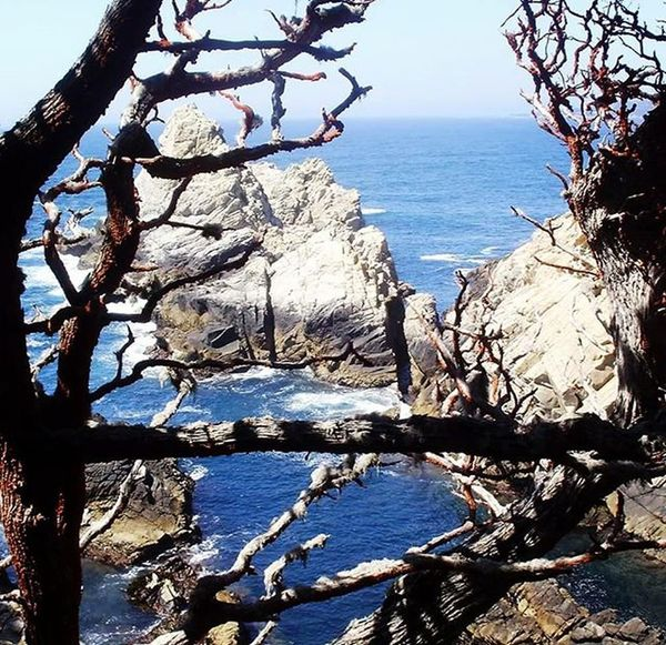 Another view through the trees (picture taken in 2010) Pointlobos Pointlobosstatereserve Carmelbythesea California Pacific Pacificocean Pacificcoast Hikingbythesea Ocean Oceanside Sea Nature Naturewatching