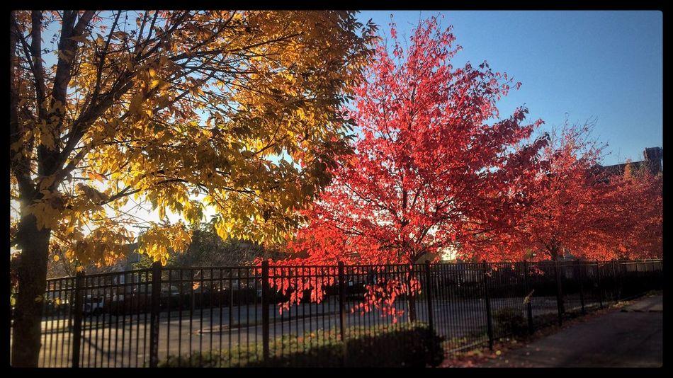 Missing color. . . Logansquare ColorPalette