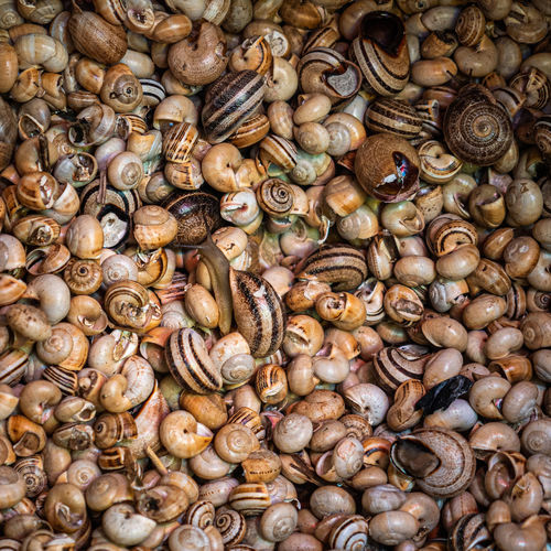 A close up of raw snails in shells alive for sale in the fish market