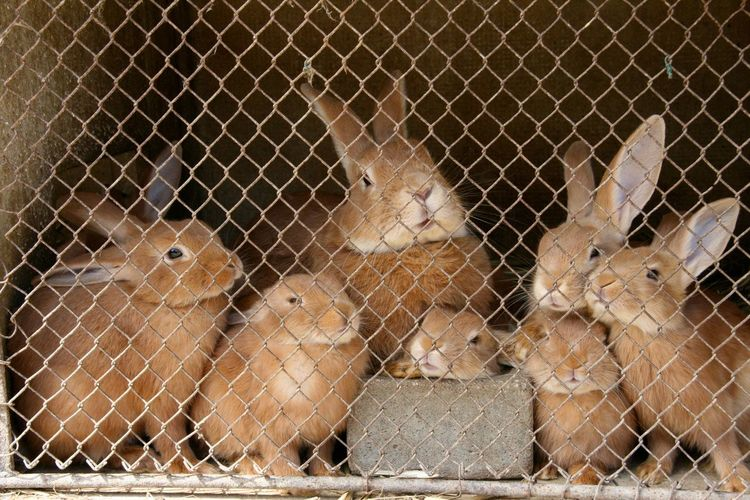 Close-Up Of Rabbits In Cage