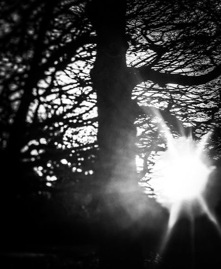 Sunset in black and white. Check This Out Winter Tranquility Eye4photography  EyeEm Gallery Eyeemphotography EyeEmBestPics EyeEm Best Shots Popular Photos The Week On EyeEm Nature_collection EyeEmNewHere Backgrounds Blackandwhite Photography Blackandwhite Sunset_collection Sunset Nature Tree Forest Tree Trunk Sunlight Day Nature Growth Branch Outdoors No People Beauty In Nature Close-up