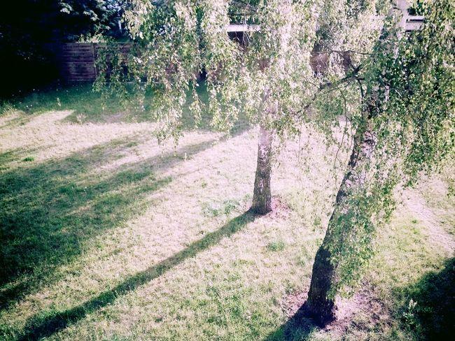 Good morning! Trees Sunshine Goodmorning EyeEm
