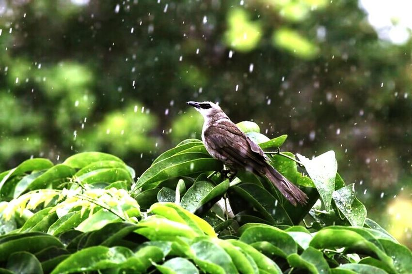 Bird. Canonphotography First Eyeem Photo Canon Canon1100d Animal Colour Of Life Balinesse Bali