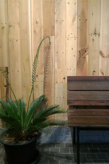 Plant No People Indoors  Nature Day Potted Plant Japanese Style Wodden Texture Bench Ornamental Plant Minimalist Architecture EyeEm Best Shots