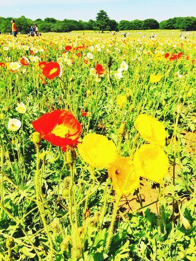 お花畑 国立昭和記念公園 Flower