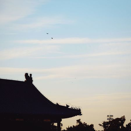 Bird Flying Silhouette Outdoors Sky Sunset Travel Destinations Architecture Day Tree Flying Bird Old Building  Temple Of Heaven Park FUJIFILM X-T10 Place Of Worship Beijing, China King - Royal Person Royalty Light And Shadow History Architecture Palace Built Structure Cloud - Sky Travel