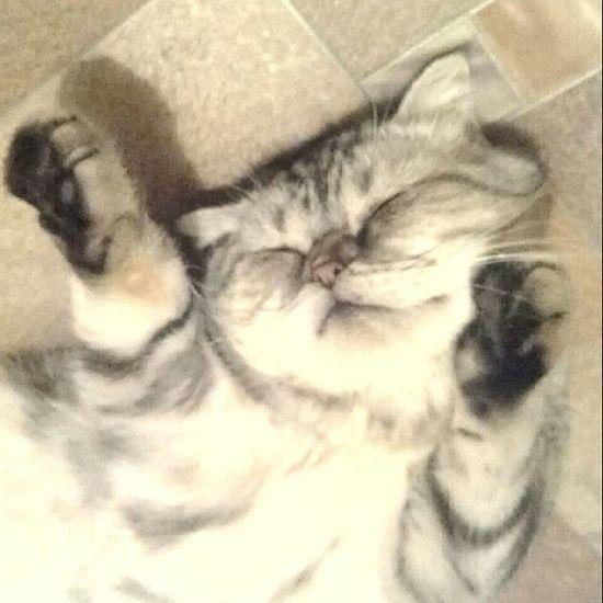 Котейка кошка домашниелюбимцы питомцы твиги folowforfollow follower like