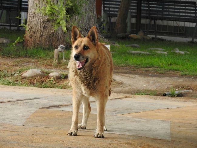 Dog cravings Dog Domestic Animals Dog Lover