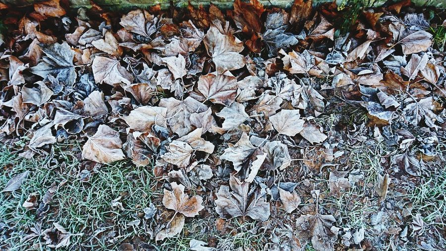 Full Frame Backgrounds Nature High Angle View No People Day Outdoors Fragility Close-up Beauty In Nature Tree Leaves Multicolored Leaf Icey Leaves Nature Shots Pattern Leaves Ice Cold Weather Frosty Mornings Frosty Leaves Pretty