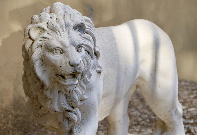 Close-up of lion statue