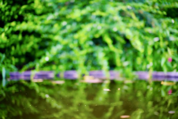 Plant Green Color Growth Selective Focus Beauty In Nature Nature Day No People Freshness Close-up Full Frame Outdoors Water Reflection Leaf Plant Part Tranquility Tree Food And Drink Purple