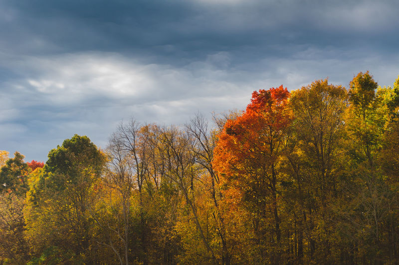 Tree Autumn Change Cloud - Sky Sky Plant Beauty In Nature Scenics - Nature Tranquility Nature Orange Color Tranquil Scene No People Growth Day Outdoors Non-urban Scene Forest Land Leaf Fall