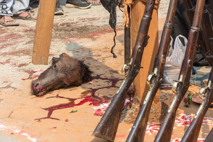 Kathmandu, Nepal - March 25, 2018: The head of an animal cut off during a sacrifice on March 25, 2018 in Kathmandu, Nepal. High Angle View No People Mammal Vertebrate Domestic Domestic Animals One Animal Day Nature Sacrifice