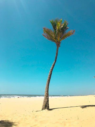 Three Personal Beach Land Sky Nature Sand Blue Clear Sky EyeEmNewHere EyeEmNewHere The Mobile Photographer - 2019 EyeEm Awards