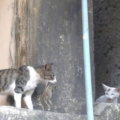 Cat Mom Live Hunting in front of my eyes for his Child