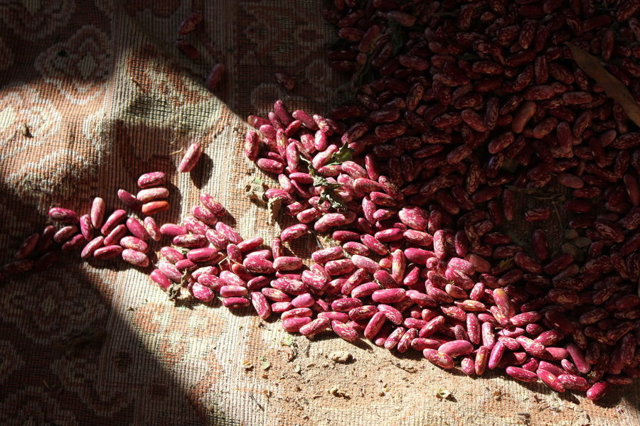 Beans Red Bean Food Freshness Haricot Haricot Bean Healthy Eating Indoors  Kidney Beans Light And Shadow Red Selective Focus