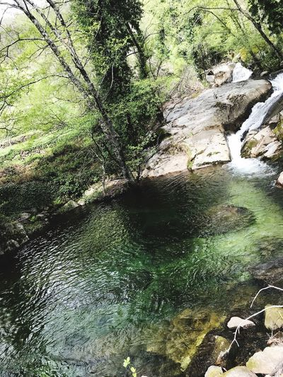 Nature Water Day No People Full Frame High Angle View Sunlight Green Color Tranquility Beauty In Nature Plant Clean