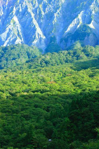otito39 Mountain Car Forest 鍵掛峠 大山 鳥取県 日本 Japan