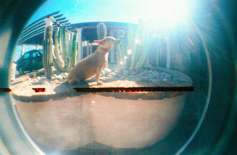 Sunlight Full Length Sunbeam Lens Flare Summer Sunrays Sony Xperia Xperia ZL EyeEmBestPics EyeEm Best Shots No People Rustic House Mexico Sun Dogs Of EyeEm Chihuahua Dog Portrait Bambino Lomography Fish Eye Lens Model Model Pose Pothoshot Hot The Great Outdoors - 2017 EyeEm Awards Pet Portraits