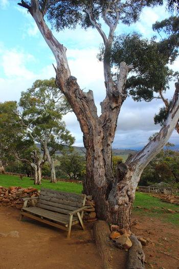 Australia Australian Landscape Beauty In Nature Bench Growth Nature No People Outdoors Sky Tasmania TasmaniaAustralia Tree Tree Trunk Wood - Material EyeEmNewHere