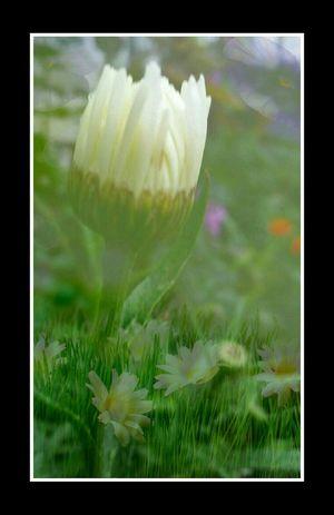 Des Fleurs White Photo