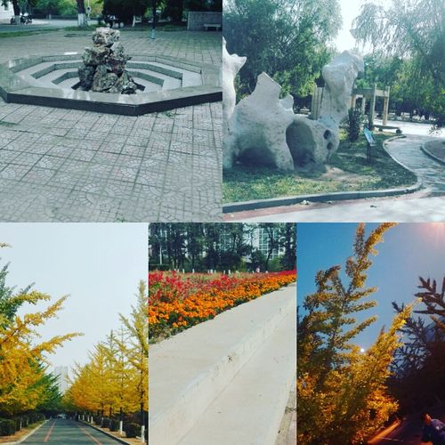 China is truly beautiful. Im gonna have a good time Descovering Places Jinzhou Beauty In Nature Outdoors Nature Sunlight