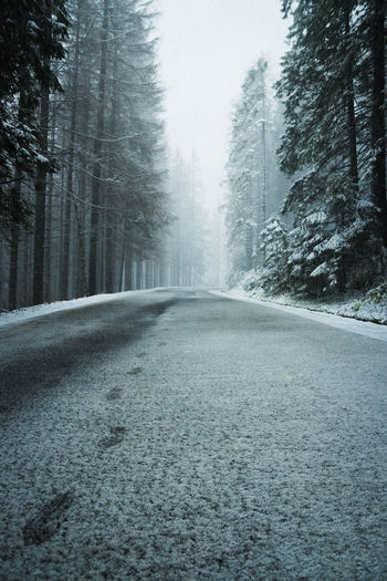 Surface level of road along trees during winter