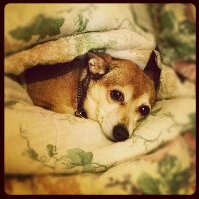 Snuggles with Kayla. Beccakempphotos PrincessKayla