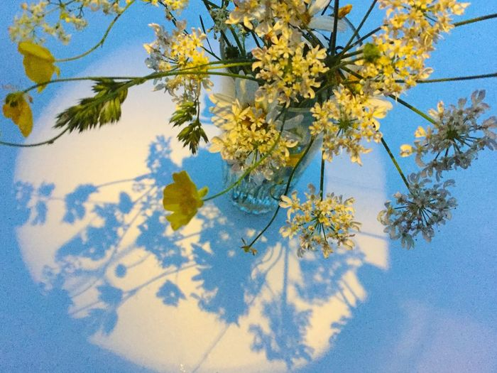 Close-up of blue flower tree against sky