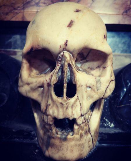 Skull Roma Rome