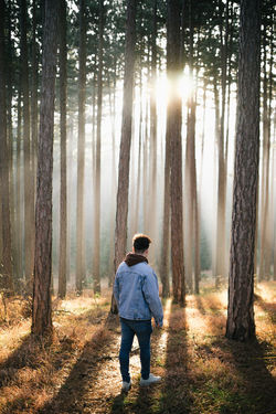 Adult Adults Only Autumn Beauty In Nature Casual Clothing Day Fog Forest Full Length Hands In Pockets Hiking Landscape Leaf Nature One Man Only One Person Outdoors People Pine Tree Real People Rear View Scenics Tree Tree Trunk WoodLand EyeEmNewHere