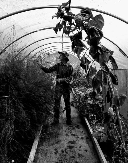 Indoors  Walled Garden Nature Built Structure Growth Plant Freshness Fragility Flower Green Color Farmer's Life Protection Architecture Circular Shape inspecting Caring pollytunnel black and white Light And Shadow Lone Person Breathing Space