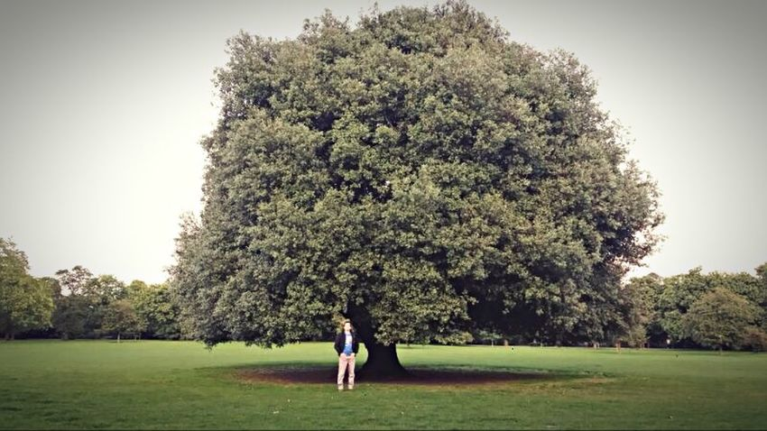 London Londres Greenwich Park Big Tree Nature London Lifestyle