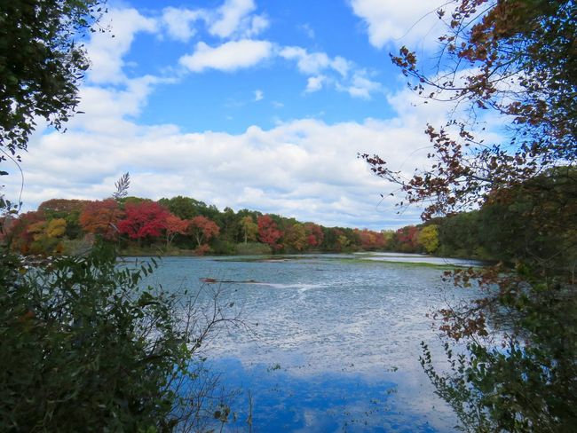 Landscape tranquil scene beauty in nature outdoors at the preserve autumn in New York multicolored trees blue skies and white fluffy clouds water reflections Outdoors Scenics - Nature No People