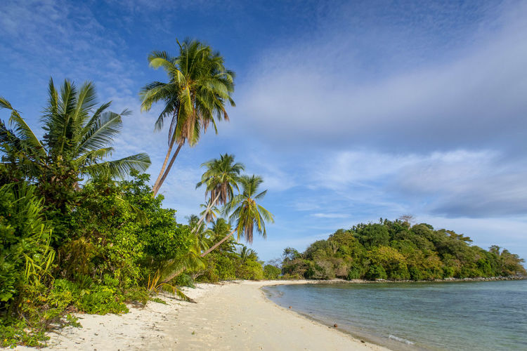 Scenic view of palm trees on beach against sky