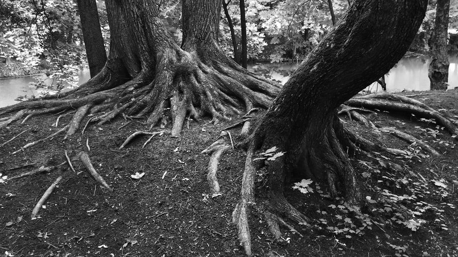 Nature Aristocratic Mansion Mansion Pushkin  Boldino Traveling Adventure Trees Roots
