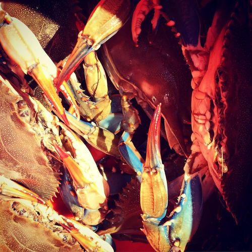 Blue Crabs Charleston, SC Blue Crabs Charleston SC Vikki Bradley O'Keefe Art