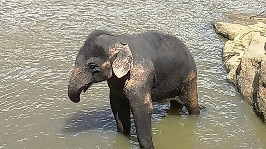 Baby elephant Animal Photography Animallovers EyeEm Animal Lover