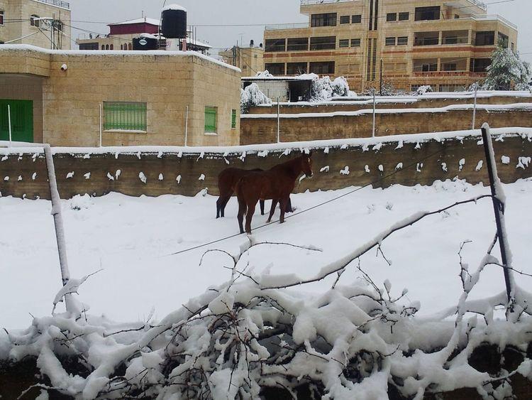 Snw Day Snwo Palstine فلسطين تصويري♡ Photography Jerusalem Photo ثلج Fun