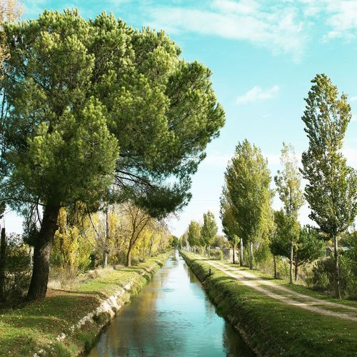 Scenic view of canal amidst trees against sky